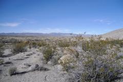 Nevada-Archaeological-Association-2001-Hells-Half-Acre154