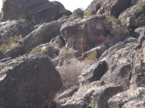 Nevada Archaeological Association 2008 January986