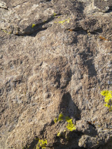 Nevada Archaeological Association 2011 Nevada Archaeological Association 2011 Ash Springs Springs13