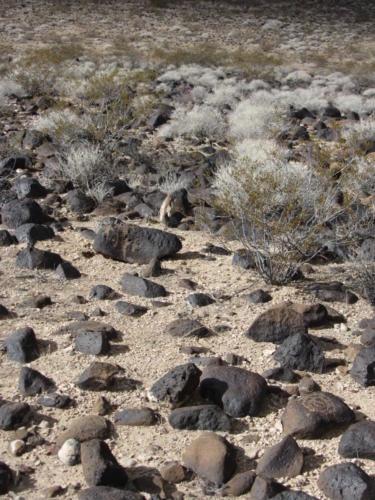 Nevada Archaeological Association 2012 Lake Mead62